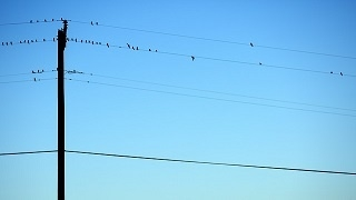 birds-1030919640m